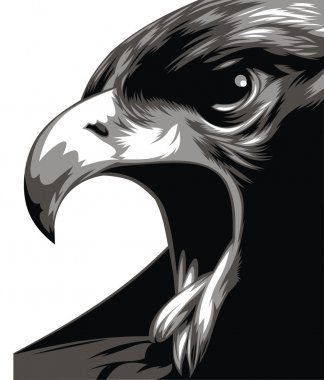 head of eagle in black and white
