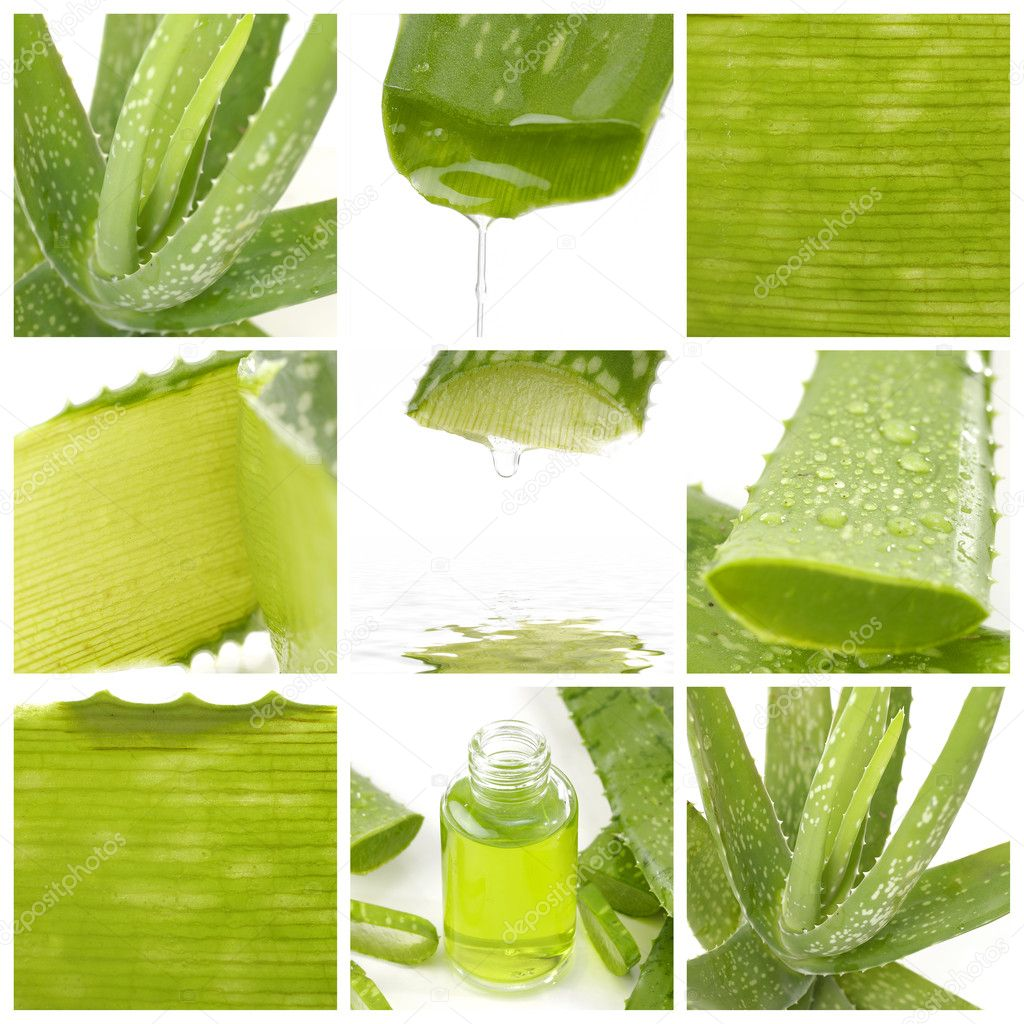Collage of aloe leaf