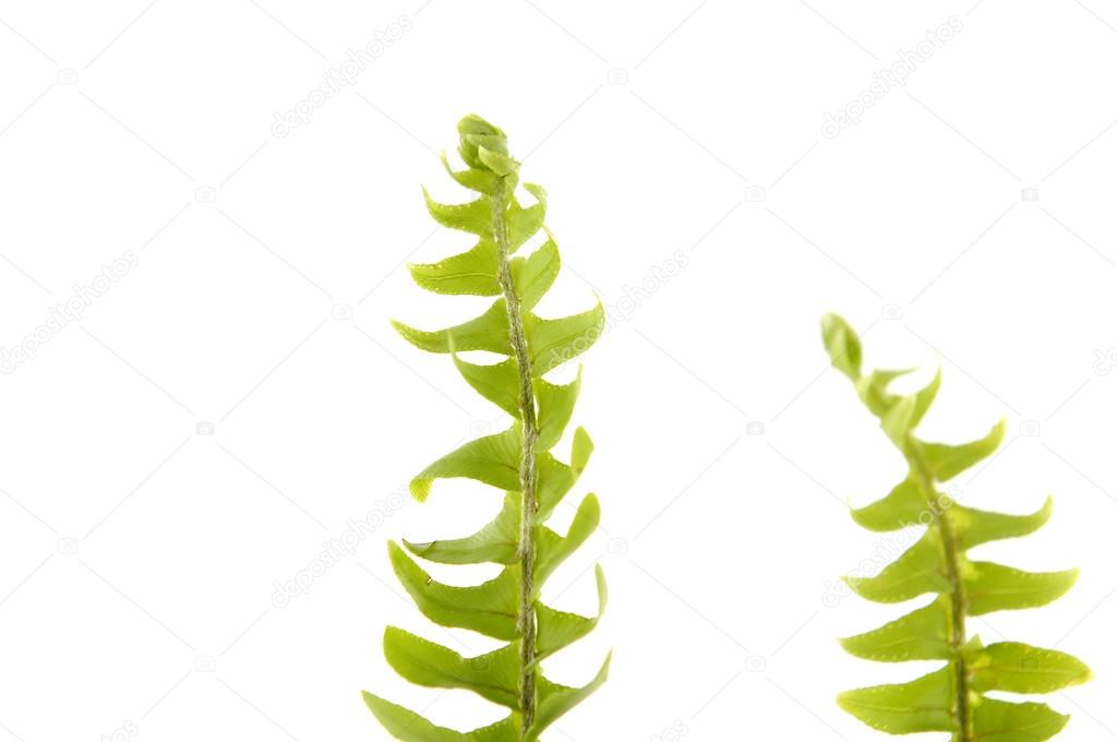 hojas de helecho — Fotos de Stock © camelliawang #22725141
