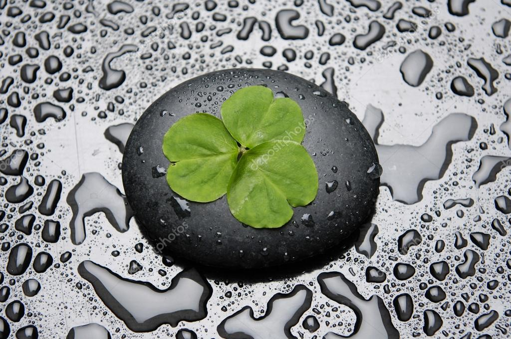 Three Leafs Clover And Zen Stones In Water Drops Stock Photo C Camelliawang 22727761