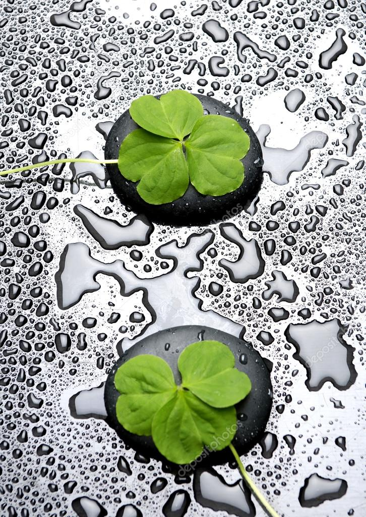 Three Leafs Clover And Zen Stones In Water Drops Stock Photo C Camelliawang 22727785