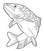 Fotografie vektorové ilustrace lososů rybサーモン ピンクの魚のベクトル イラスト