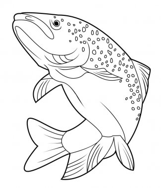Vector illustration of salmon fish