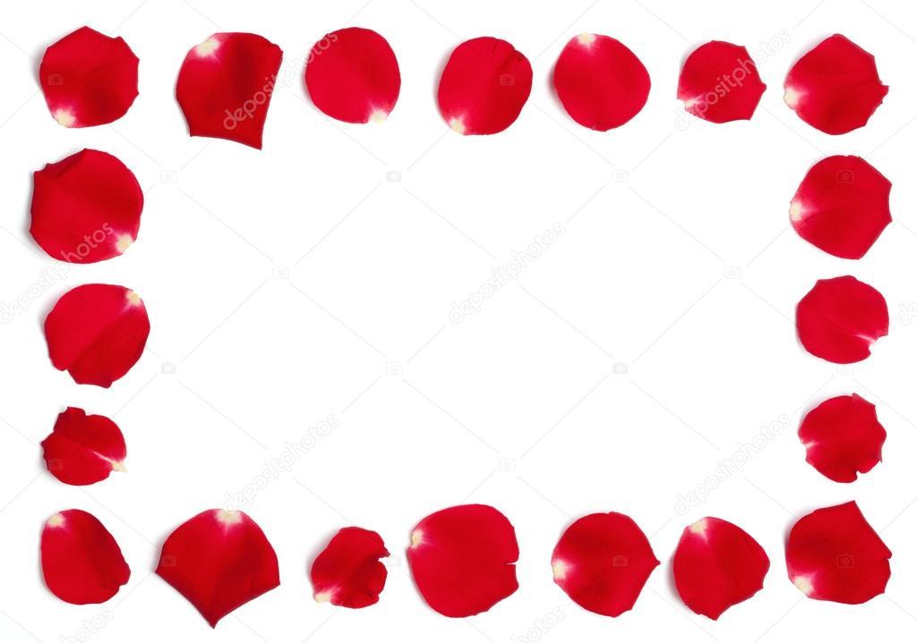 marco de pétalos de rosa roja — Foto de stock © MichaelJayFoto #21800419