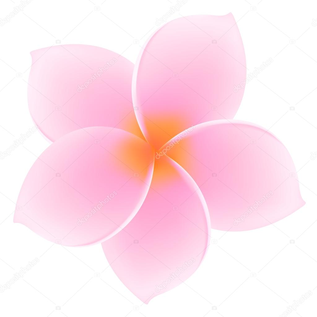 Tropical Pink Plumeria, Frangipani - Isolated Asian flower. Summer vacation symbol (Hawaii, Bali, Thailand etc.). Vector Illustration