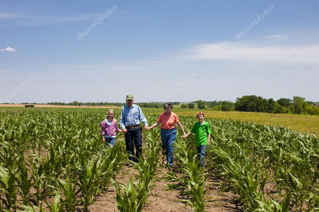 A proud hardworking midwestern grandmother and grandfather, farmers, stand with grandchildren in a field of corn