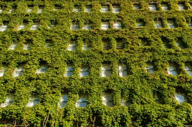 Vertical garden on wall