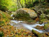 fiume tra legno autunnale