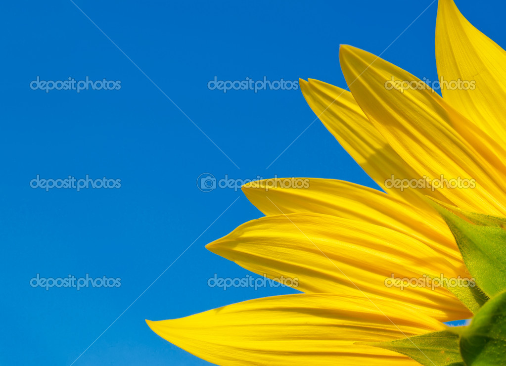 Fragment of a sunflower on a background of clear sky