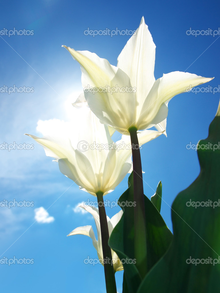 Ярко белые цветы фото