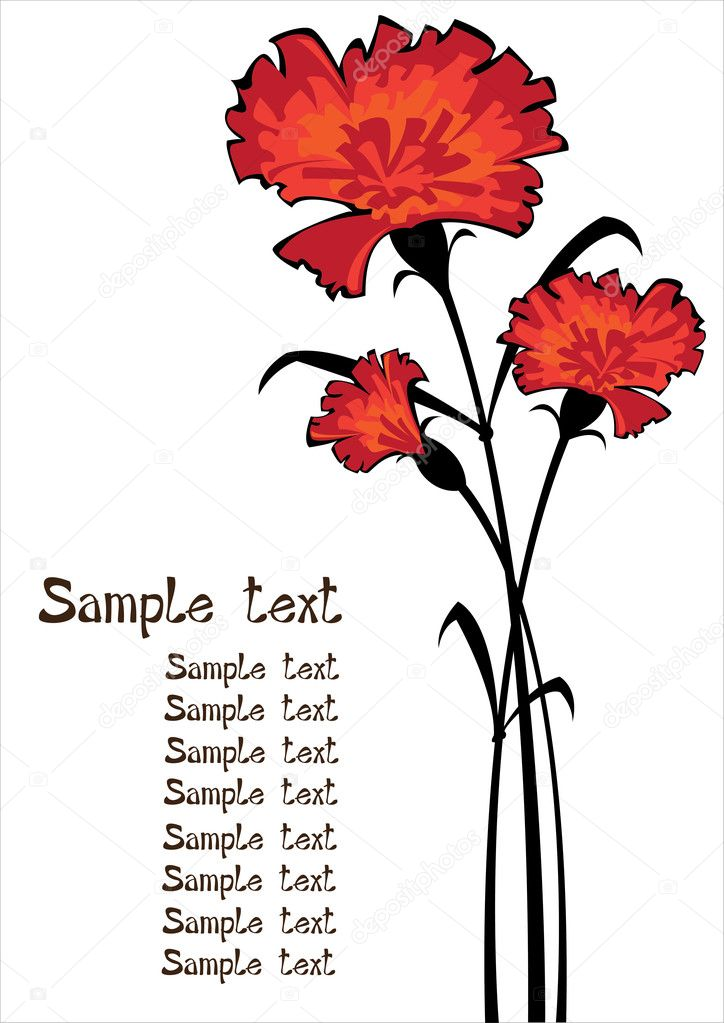 red vector carnations isolated on white background with copyspace