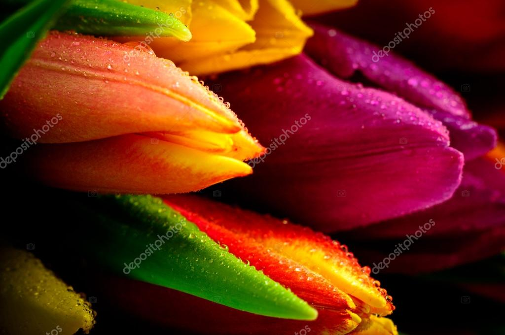 Mixed Tulips Close-up