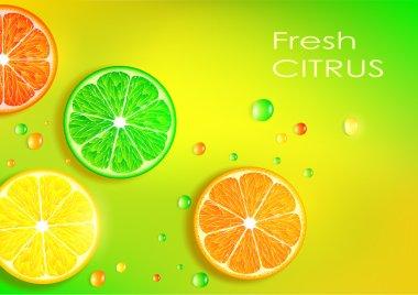 Orange, lemon, lime and grapefruit