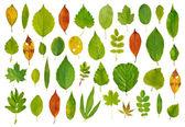 Fotografie strom listy izolované na bílém pozadí