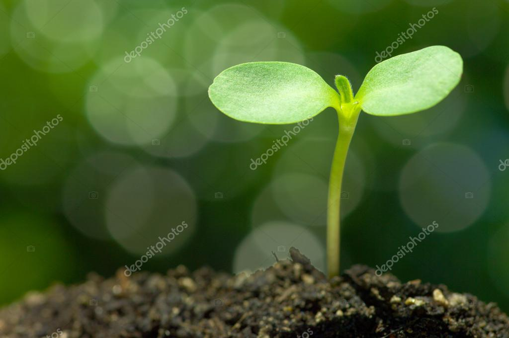 Sunflower sprout on green bokeh background.(horizontal)
