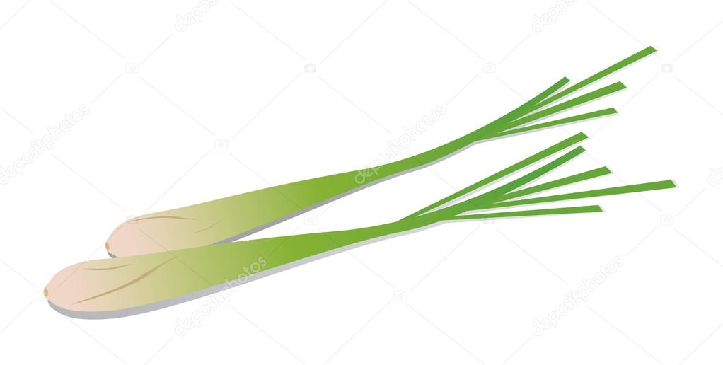 Lemongrass on white background