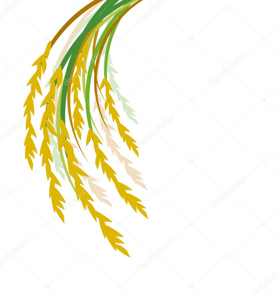 Rice design on white background