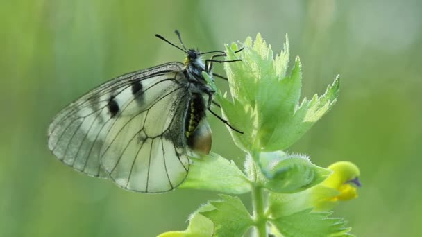 Schmetterling in der Natur am frühen Morgen