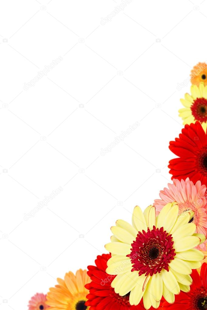 Bouquet of gerber flower isolated