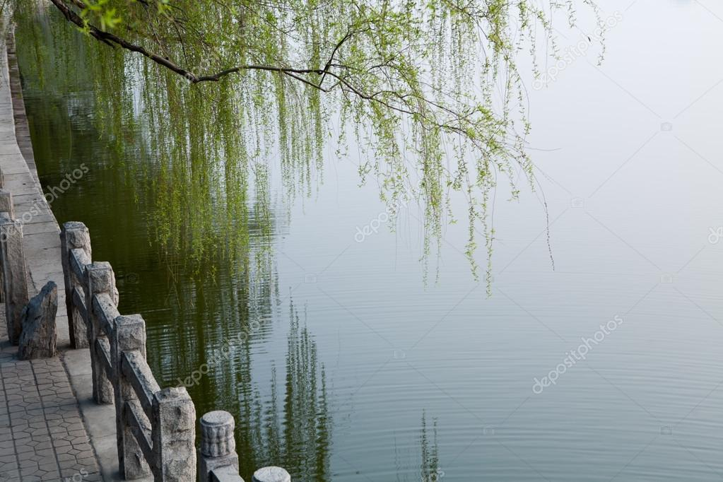 Lake and weeping willow
