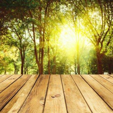 """Картина, постер, плакат, фотообои """"пустой деревянный стол на фоне леса постеры"""", артикул 27442691"""