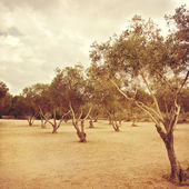 Photo Olive trees over dramatic sky