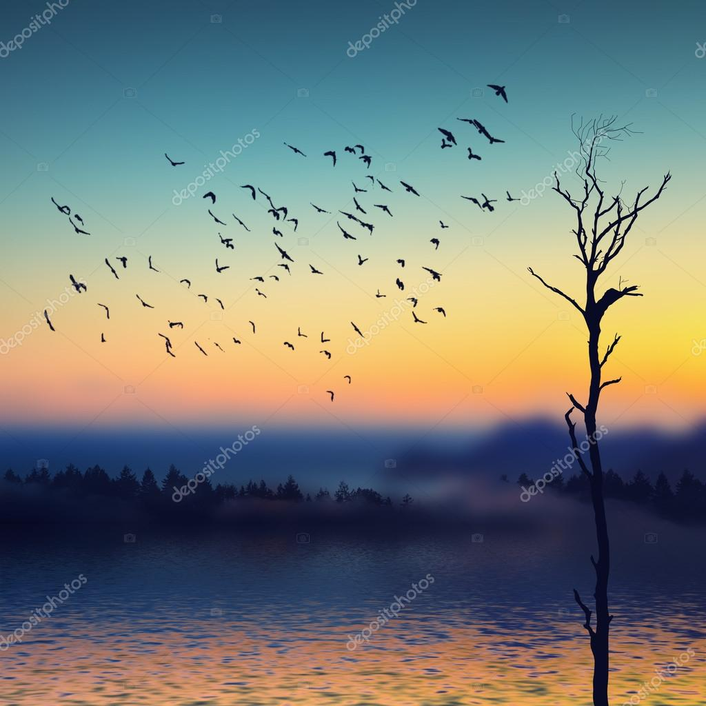Birds flying over the river