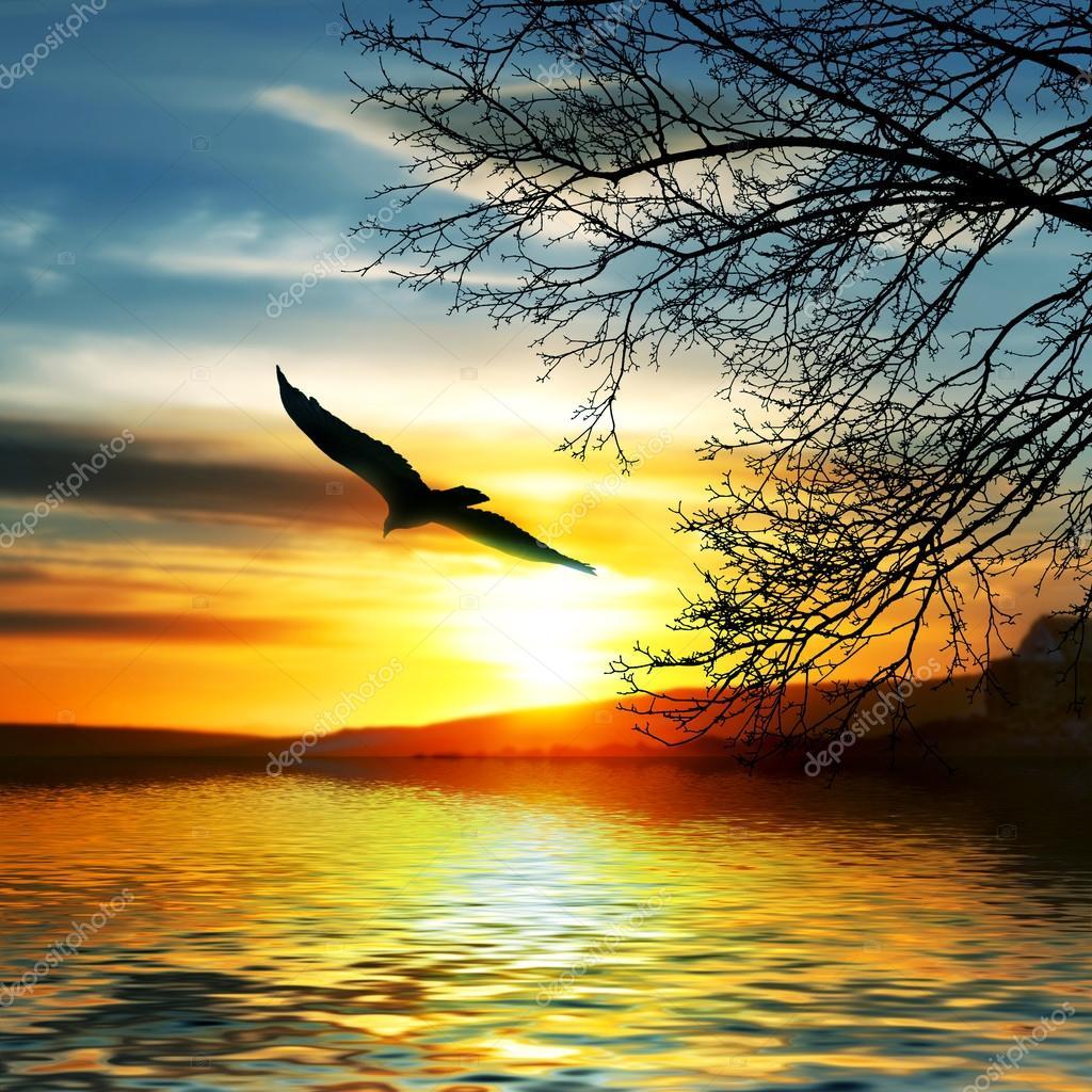 Bird flying above water.