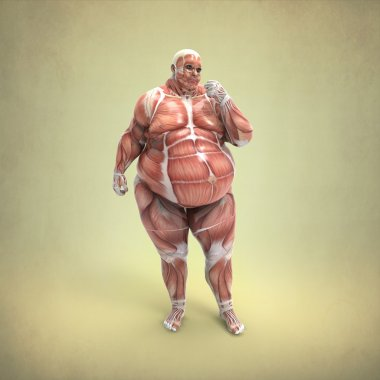 Anatomy of Obese man