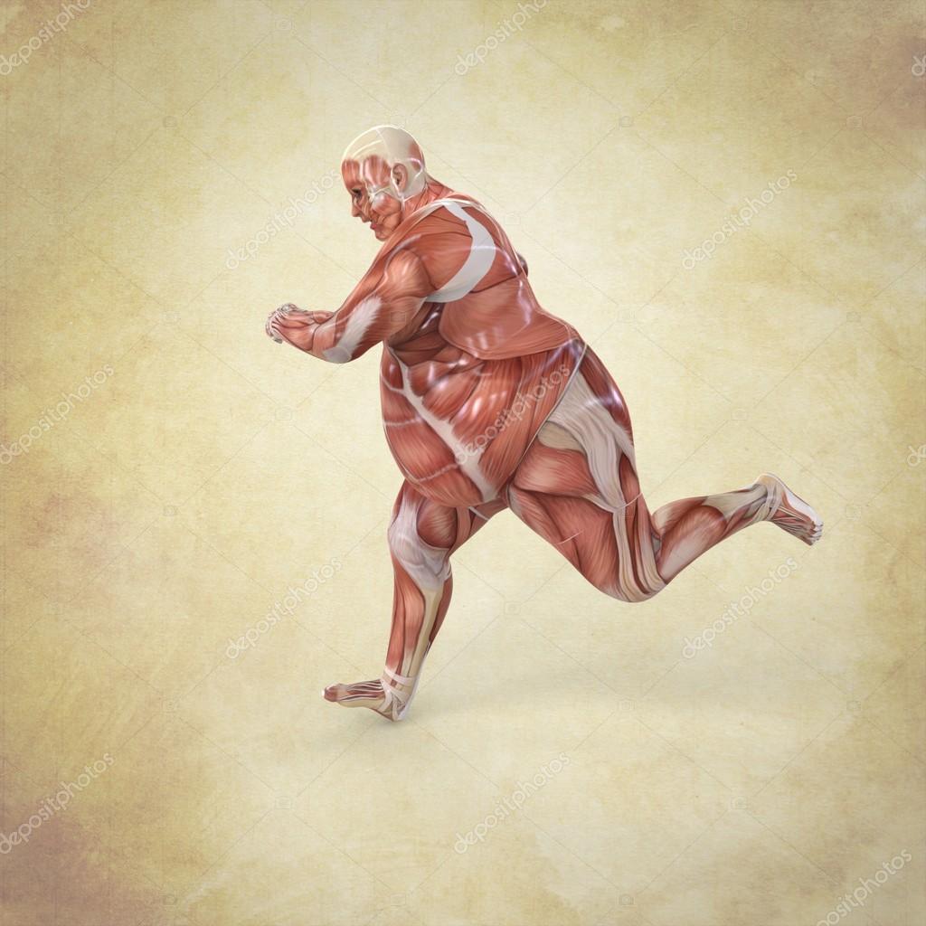 Anatomía de hombre corriente — Foto de stock © Giovanni_Cancemi ...