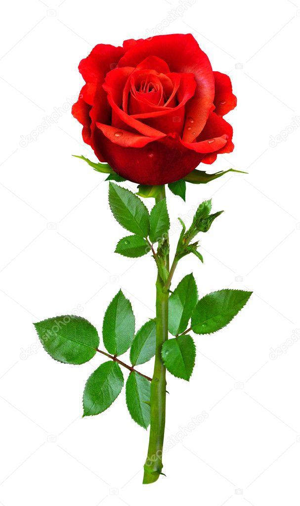 saint rose senior dating site North rose's best 100% free senior dating site join mingle2's fun online community of north rose senior singles browse thousands of senior.