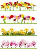 Fotografie Frühling-Blumen-Grenzen