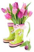 Fotografie Tulip Frühlingsblumen in Stiefel