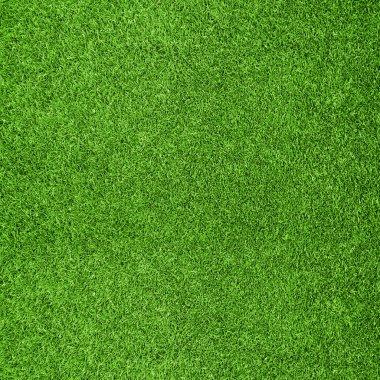 Beautiful green grass texture from golf course stock vector