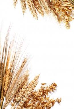 Harvest frame