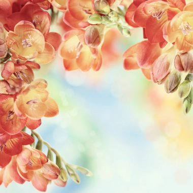 Spring freesia flowers on bokeh background