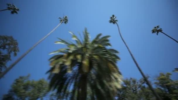 Palm tree jednotka