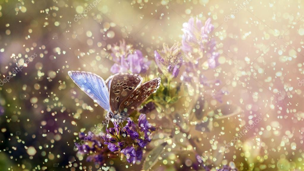 Butterfly in rain and sunset with purple wild flower