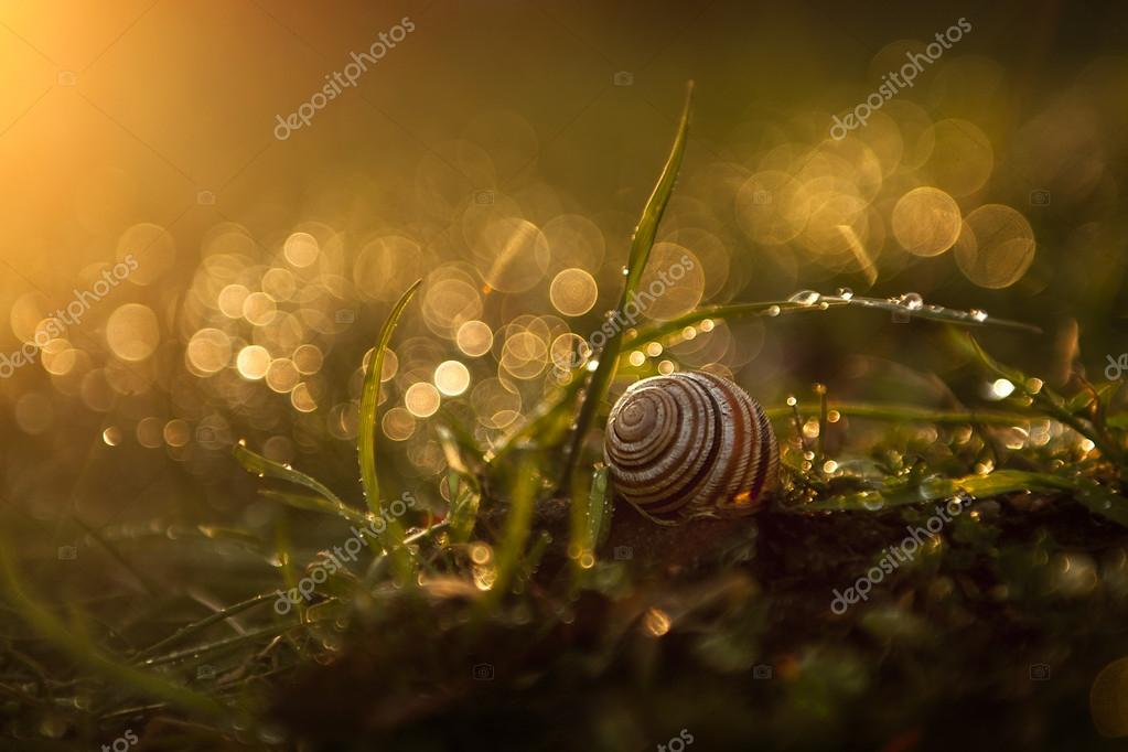 Snail in the grass after rain