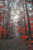 Fotografia foresta dautunno