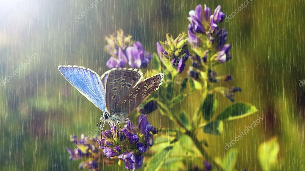 Blue butterfly and purple wild flowers in heavy rain