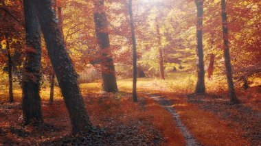 Autum forest