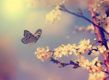 Vintage butterfly with flowers