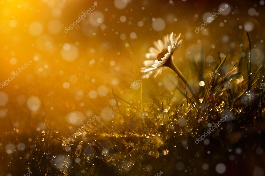 Beautiful wild flower in the forest after rain and sunset