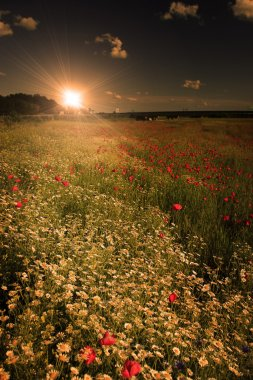 Rural landscape with lots of wild flowers in sunset