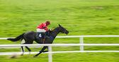 Fényképek Fut a ló