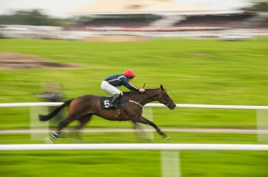 Zooming race horse