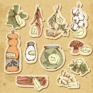 Set of spices and herbs