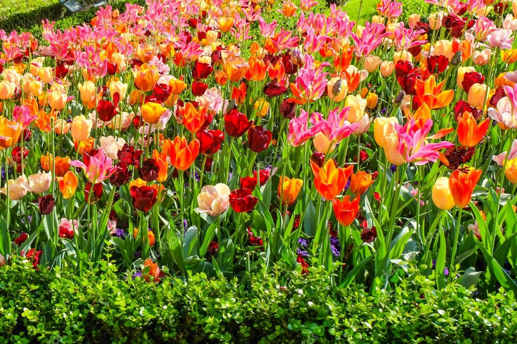 Famosos jardim de flores coloridas no parque natural — Fotografias de  VP03