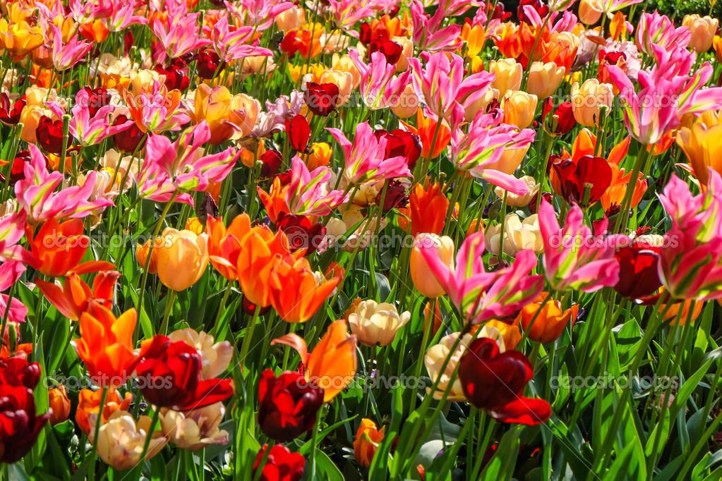 jardín de flores coloridas en parque natural — Foto de stock ...